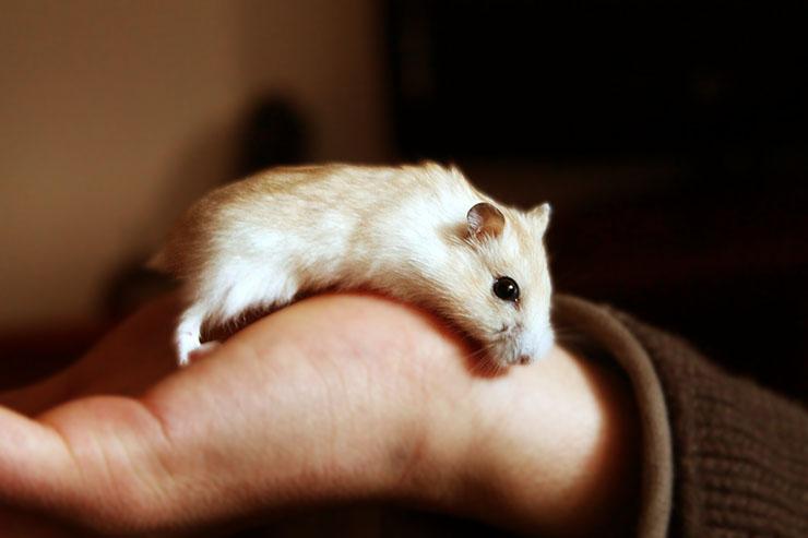 許可を取ればペット不可なマンションでも飼える可能性の高い生き物とは?